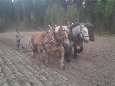 Äestystä kolmella hevosella. 3ha kaikkineen.