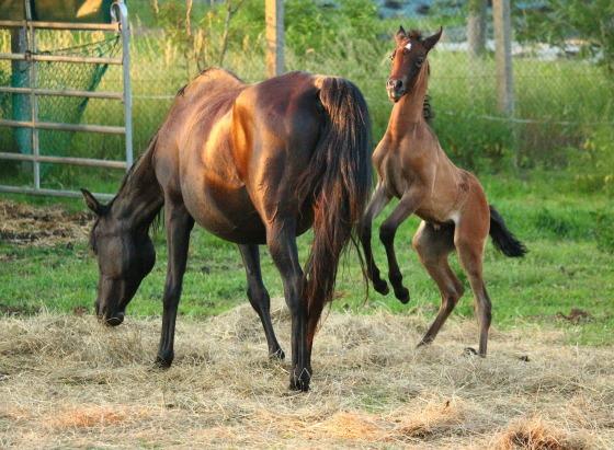 horse-1647771_1920