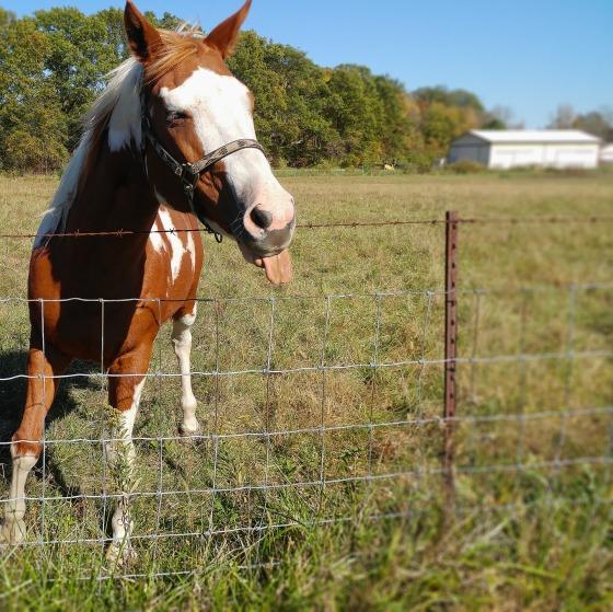 horse-1782715_1920