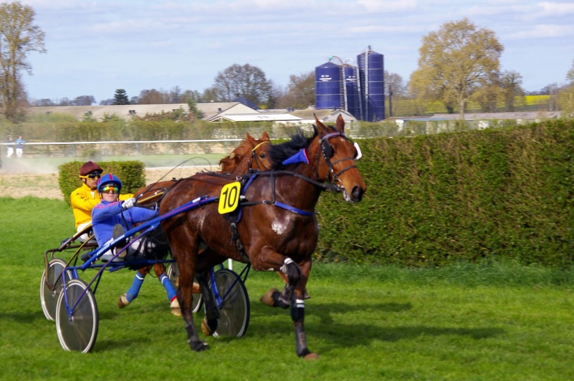 horse-racing-719635_1920
