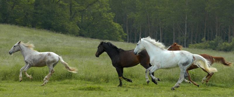 horse-2031062_1920