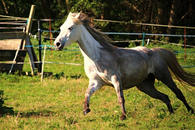 horse-2831796_1280