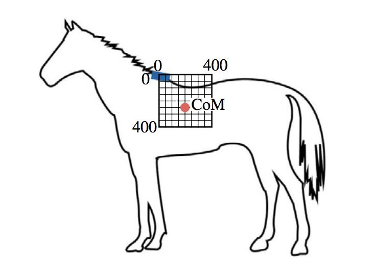 Hevosen massakeskipiste