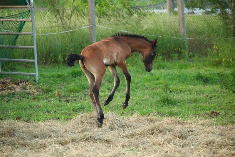 horse-1442794_1920.jpg