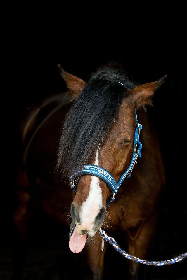 rento hevonen