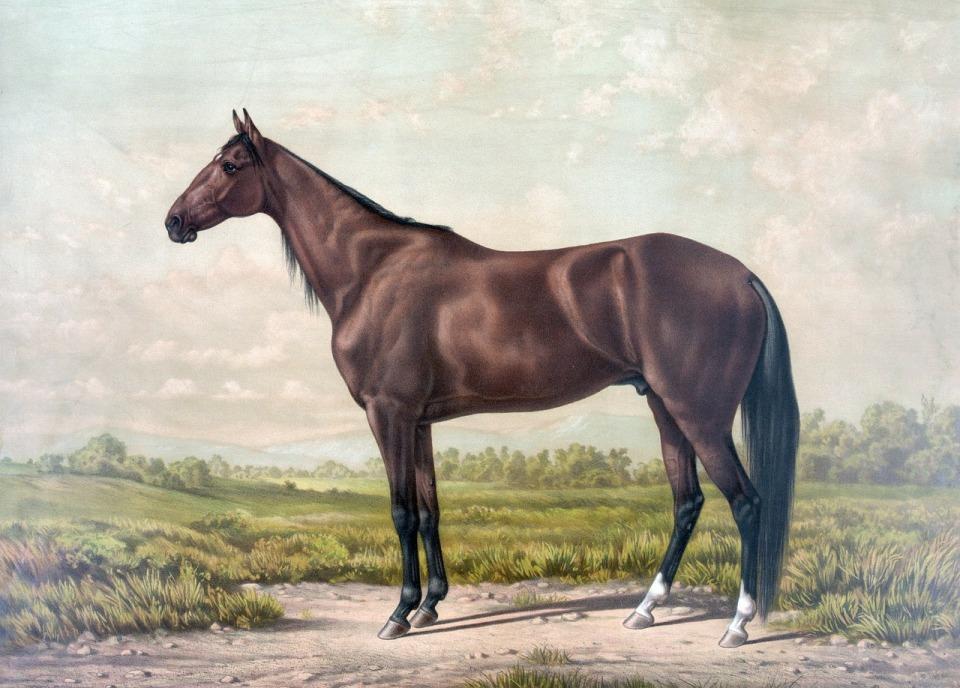 Hevosen biomekaniikka