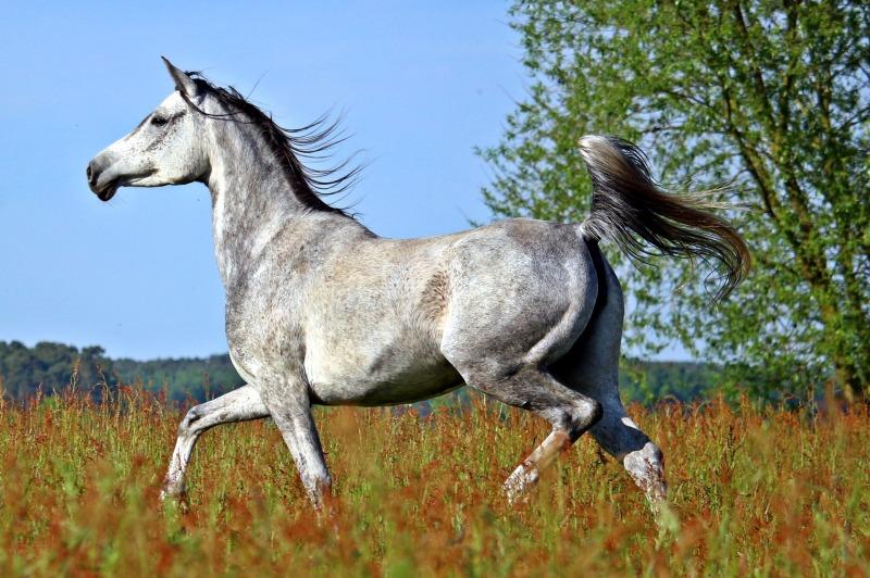 Lapakuopat hevosella