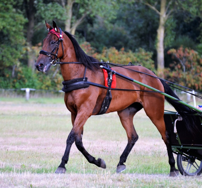 puoltava hevonen