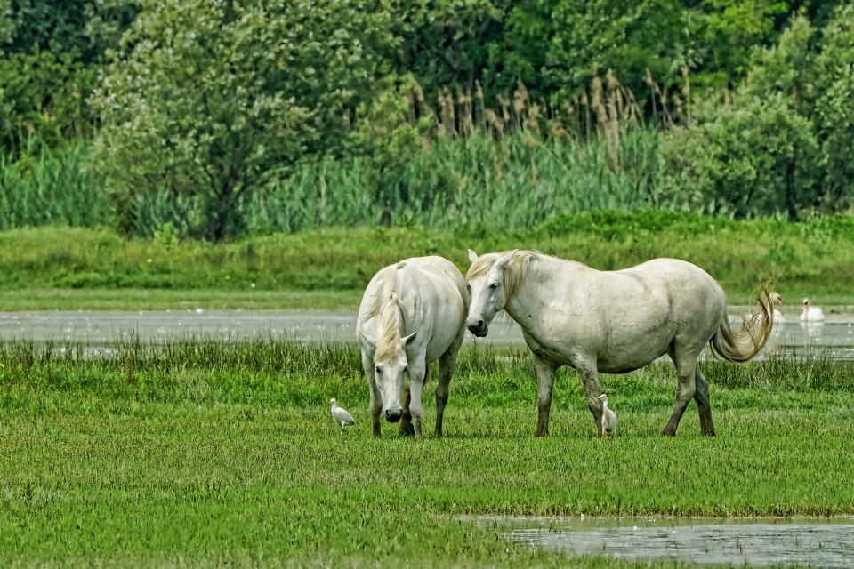 Hevosen laihduttaminen