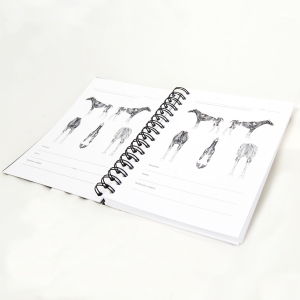 Harjoituspäiväkirja hevoshieronta