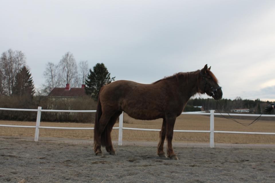 PPID hevosella