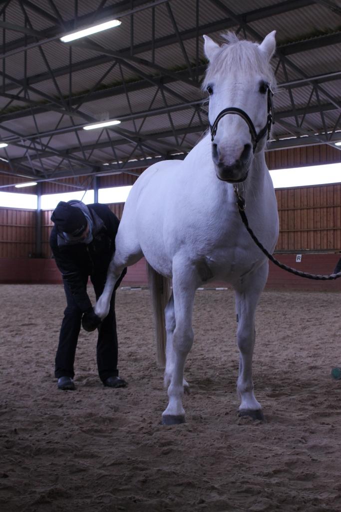 Hevosen passiivinen venytys