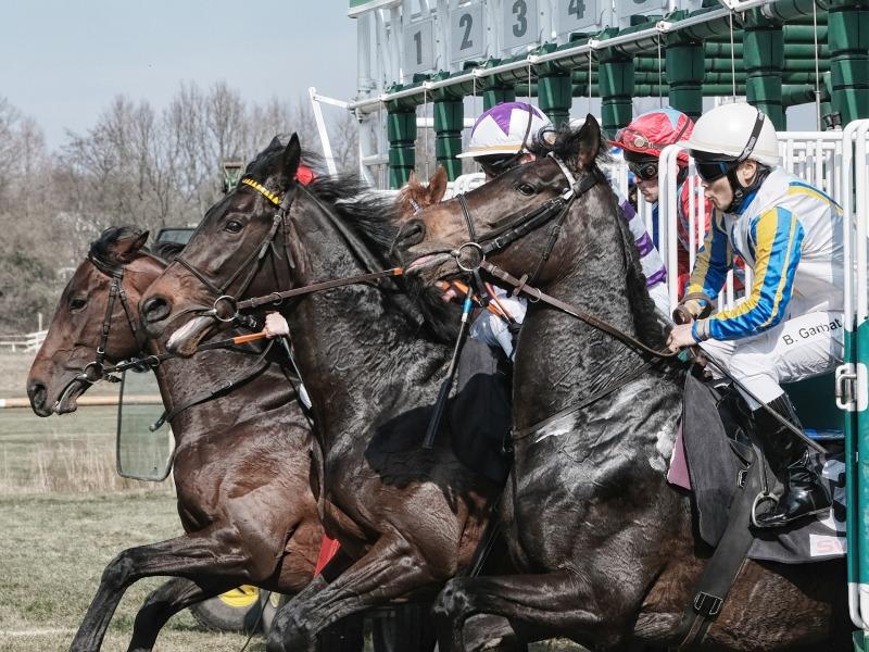 hikoileva hevonen