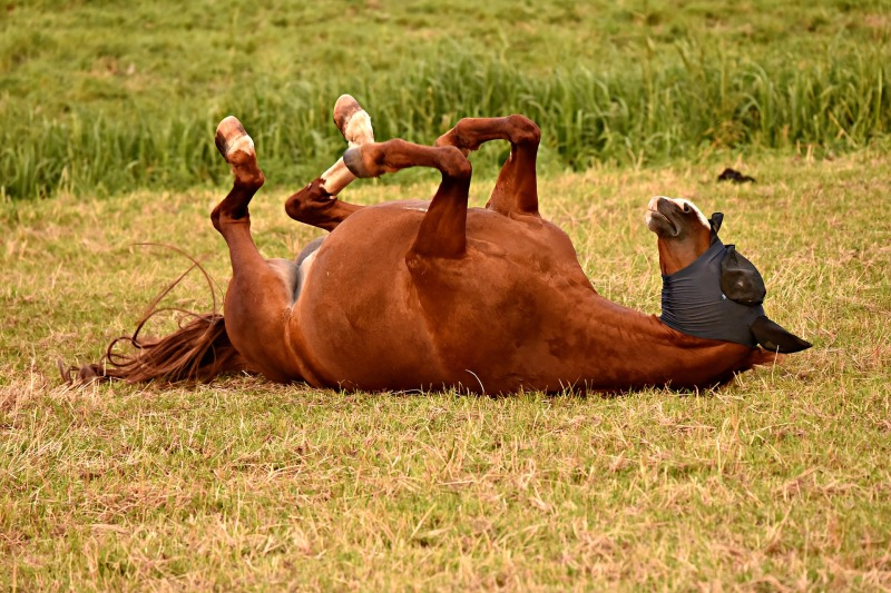 piehtaroiva hevonen